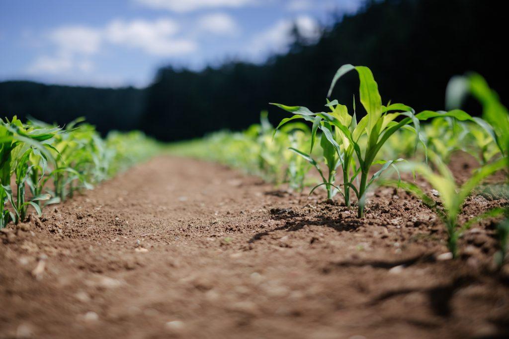 Crops biogas